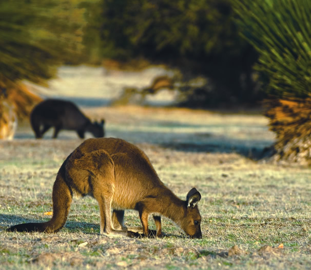 Kangaroo Island: Luxury Kangaroo Island Accommodation