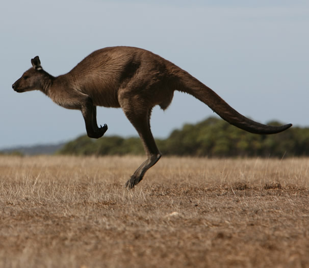 Kangaroo Island: Luxury Kangaroo Island Accommodation