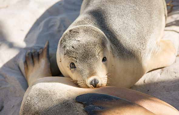3. Southern Ocean Welcome